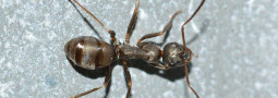 Ako na mravce v byte